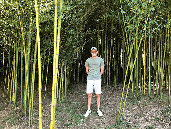 Bamboo forest at Sky Top