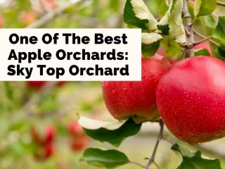 Sky Top Orchard Flat Rock NC with pictures of apple trees and two bright red apples on the tree