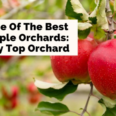 Sky Top Orchard: 7 Fantastically Fun Fall Things To Do