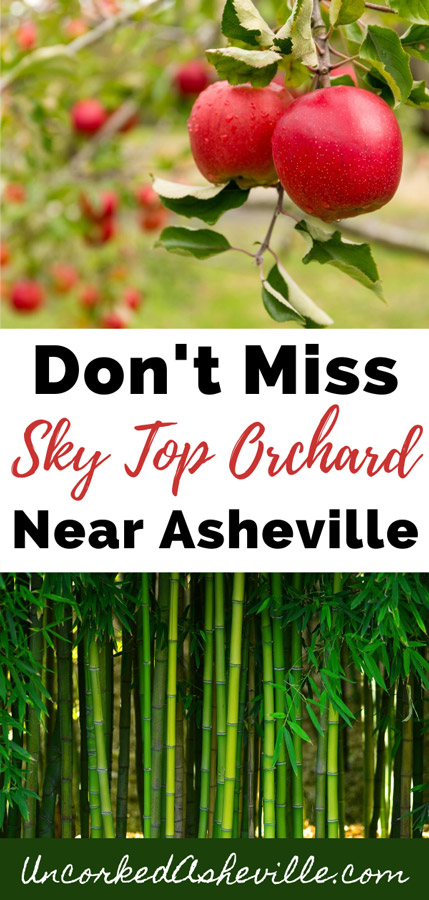 Sky Top Orchard Pinterest Pin with two pictures, one of green bamboo forest and one of two red apples on an apple tree