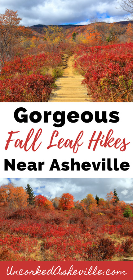 Gorgeous fall hikes near Asheville NC Pinterest Pin with two pictures of Graveyard Fields Loop and Trail with orange leaves in the fall