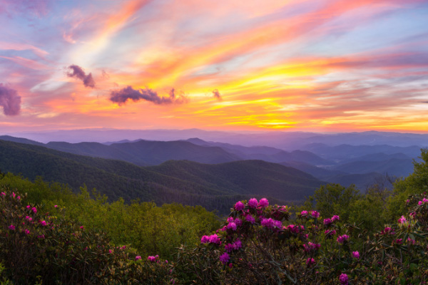 Moving To Asheville North Carolina Weather Craggy Gardens sunset in the spring with fuchsia flowers