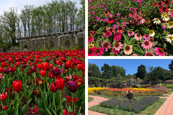Outdoor Things To Do At Biltmore Estate Gardens and Blooms with red tulips, pink and red flowers, and gardens with walkway