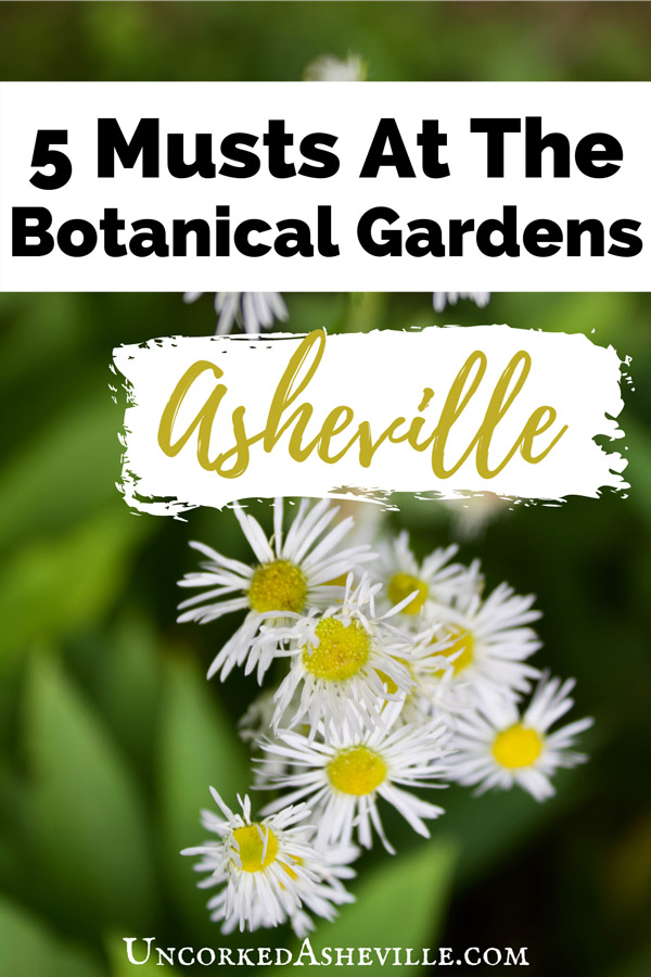 5 Things To Do At The Botanical Gardens At Asheville Pinterest pin with yellow and white flowers