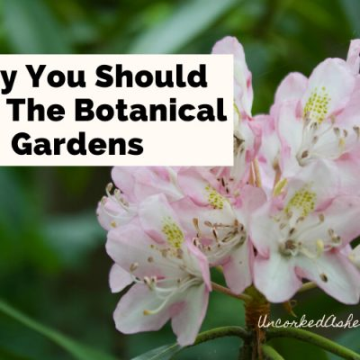Plan A Beautiful Picnic: Botanical Gardens At Asheville
