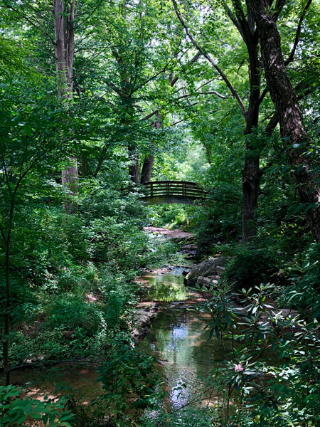 Bridge over a creek in the woods at the Botanical Gardens Asheville