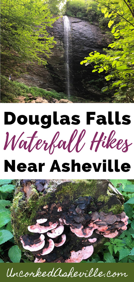 Douglas Falls Asheville NC Waterfall Hikes pinterest pin with two pictures, one of mushrooms on a tree and second of Douglas Falls the waterfall