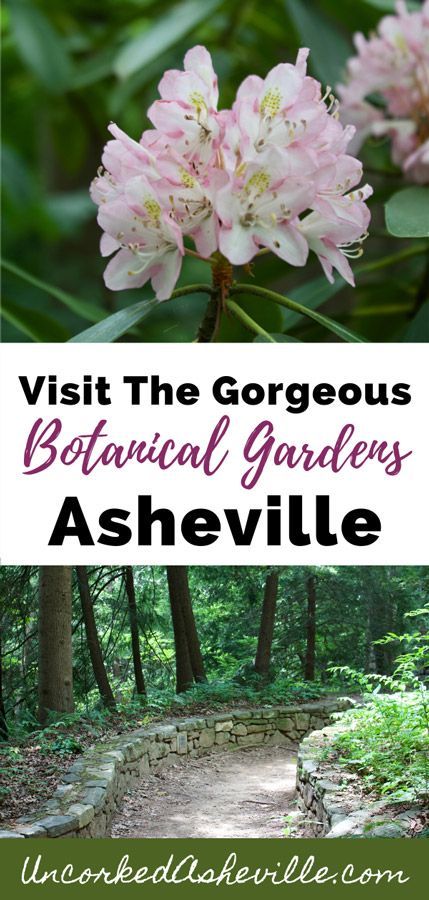 Asheville Botanical Gardens Pinterest pin with two images; top are pink and white flowers and bottom is trail lined by a stone wall
