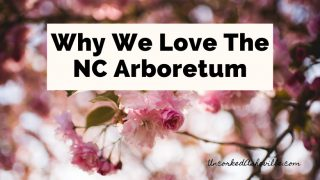 NC Arboretum Asheville North Carolina blog post cover with pink flowers