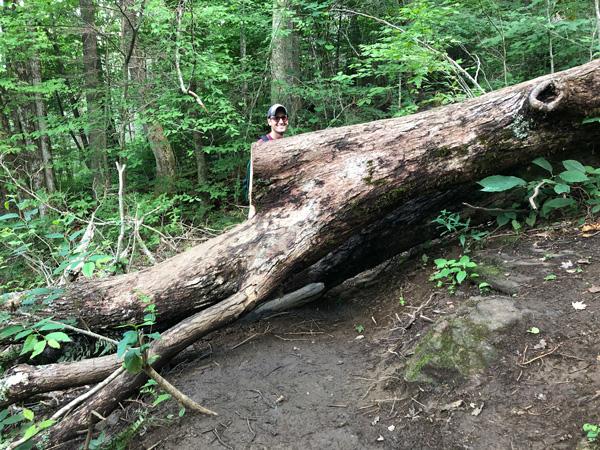 Waterfalls Near Asheville NC Douglas Falls Trail white male wearing a hat walking around a giant fallen tree