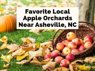 Apple Orchards in Hendersonville NC blog post cover with red apples in a basket next to a tree and pumpkin