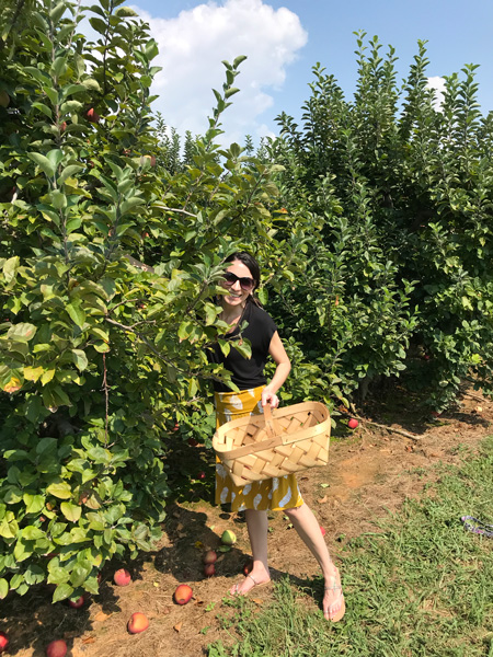 Apple Picking Near Asheville Stepp's Hillcrest Orchard with brunette white woman in a yellow skirt and black top picking apples