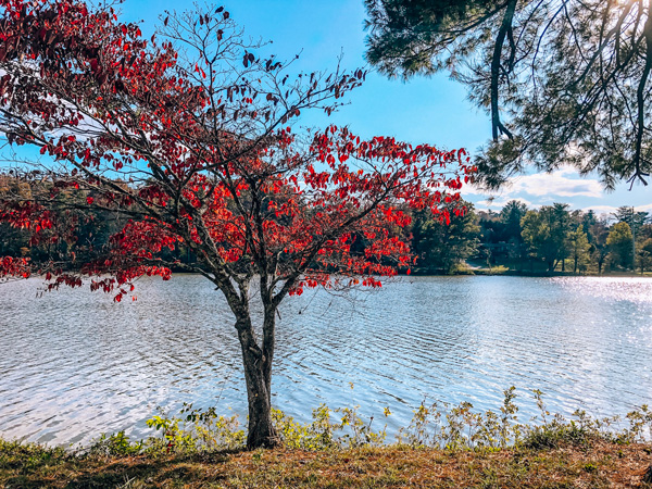 Beaver Lake Asheville NC red tree in front of the blue lake