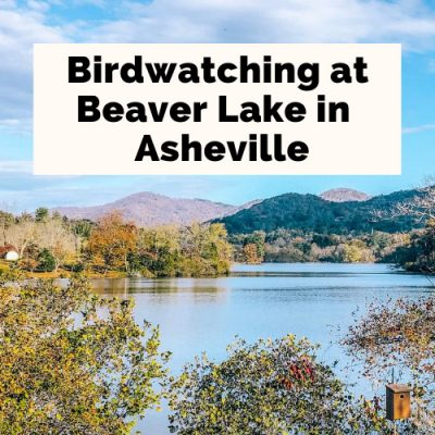 Beaver Lake Trail & Bird Sanctuary: A Hidden City Oasis