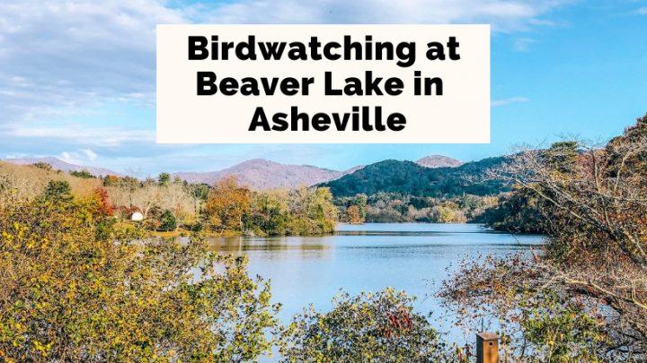Beaver Lake Bird Sanctuary Trail Asheville NC blue lake with mountains and fall foliage