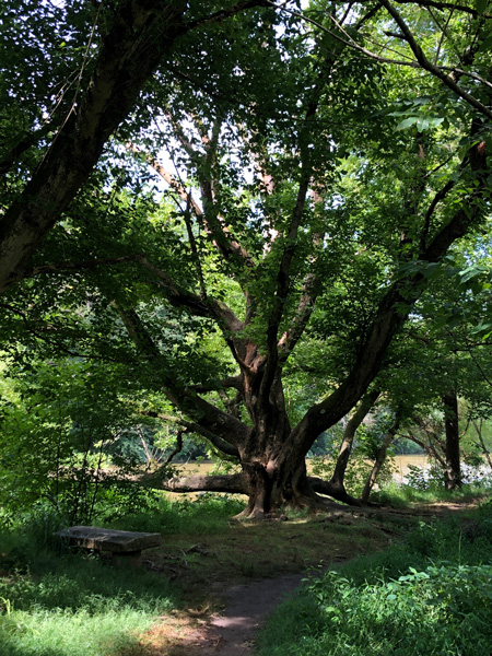 Tree inside Beaver Lake Bird Sanctuary Trail