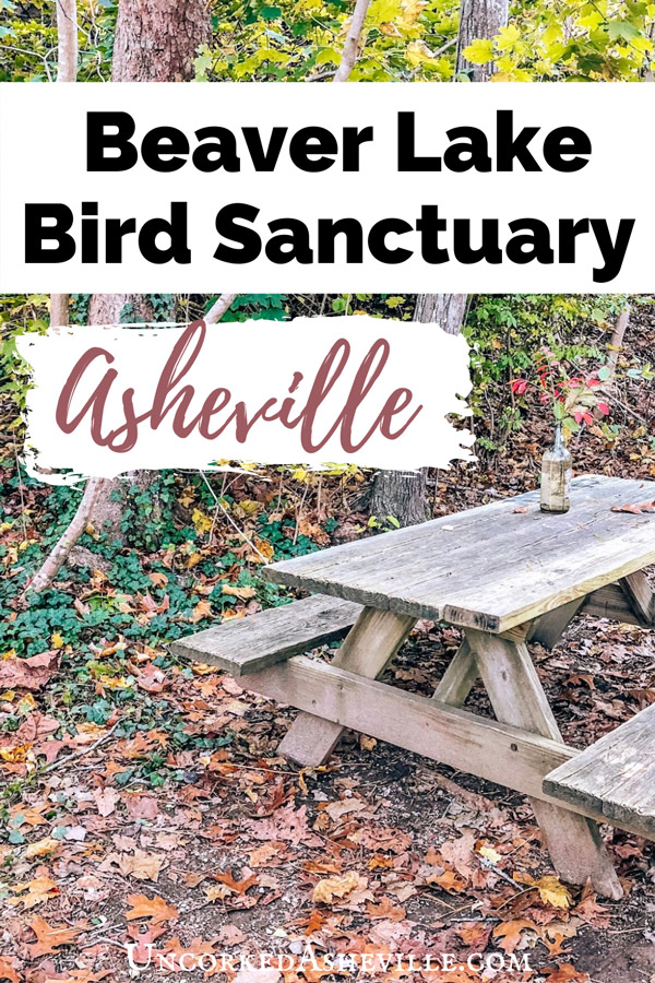 Beaver Lake Bird Sanctuary north Asheville with fall leaves and picnic table with vase and red flowers