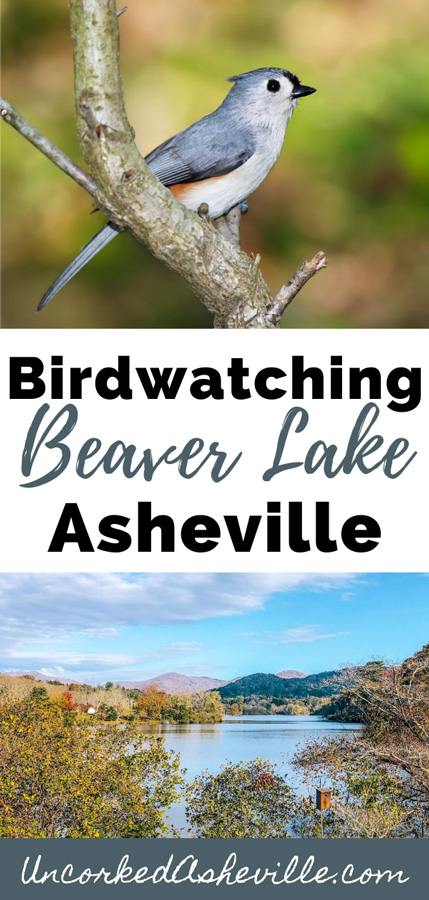 Beaver Lake Trail and Bird Sanctuary Asheville Pinterest Pin with image of Beaver Lake and a tufted titmouse bird