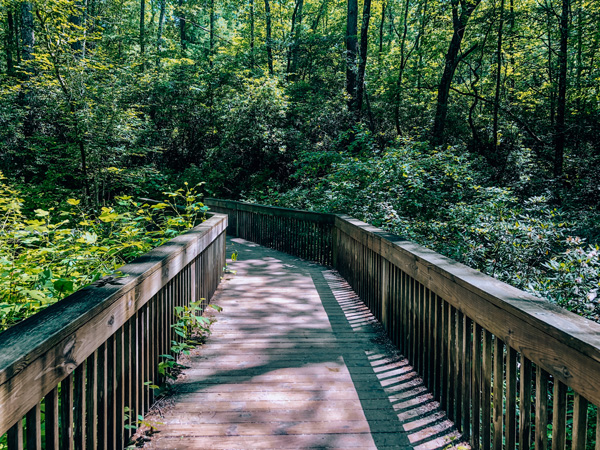 DuPont State Forest Visitor Center Entrance with wooden walkway in into the green forest