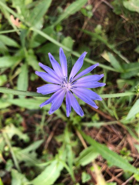 Purple flower at Beaver Lake Bird Sanctuary
