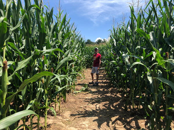 Grandad's Apples Corn Maze with white male wearing a hat and red shirt walking through a corn maze