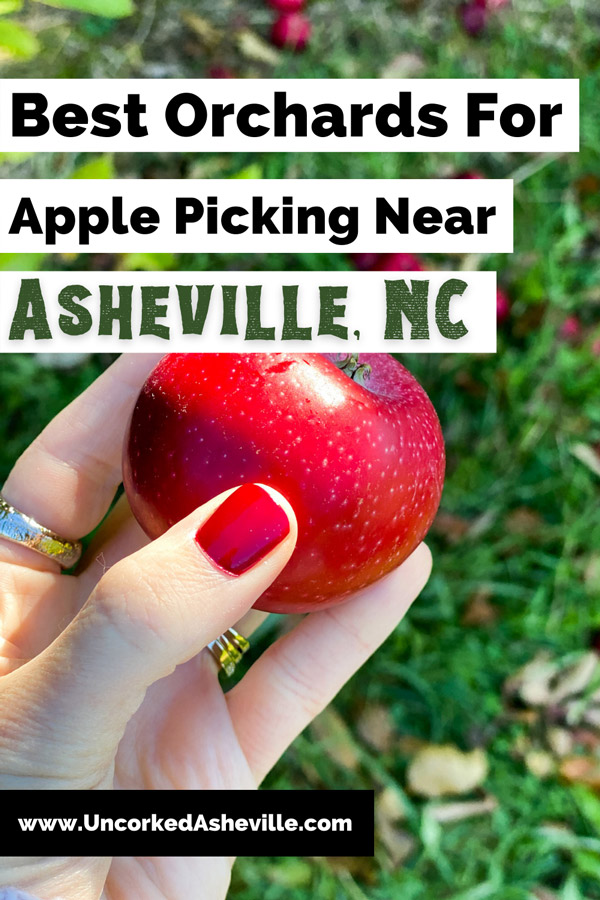 Hendersonville NC Apple Orchards and Apple Picking Pinterest Pin with white hand with red nails holding a red apple on Coston Farm apple orchard in Hendersonville