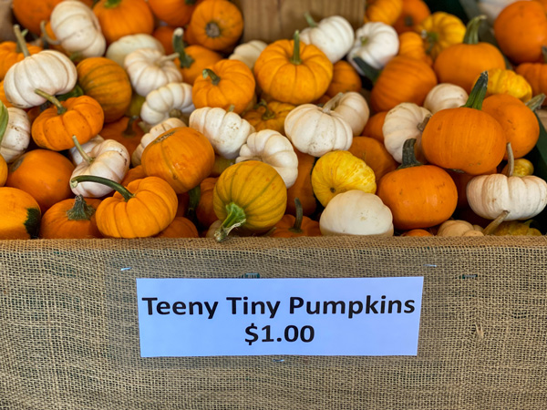 Stepp's Hillcrest Orchard Country Store yellow and orange teeny tiny pumpkins