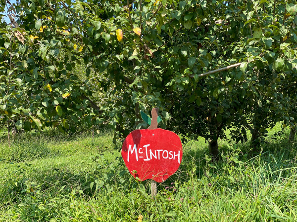 UPick Apples Sky Top Orchard Flat Rock NC with sign for McIntosh apples with apple trees