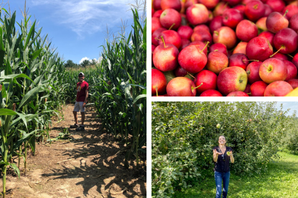 Apple orchards near Asheville for fall with picture of red apples, white brunette woman catching a green apple in an apple orchard, and a white brunette male in a corn maze