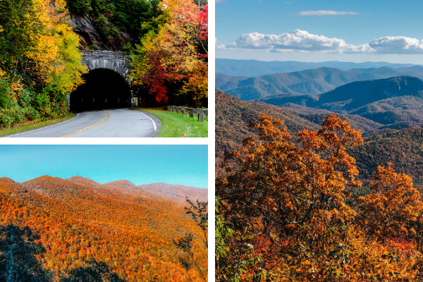 Asheville Fall On the Blue Ridge Parkway collage with BRP tunnel, pictures around Looking Glass, and fall foliage leaves in the mountains