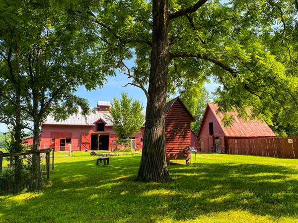 Carl Sandburg Home Barn Trails with red barn, green grass, and tree