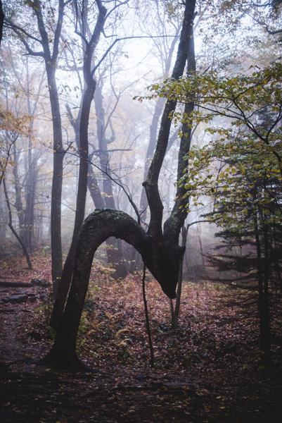 Dragon Tree Skinny Dip Falls NC