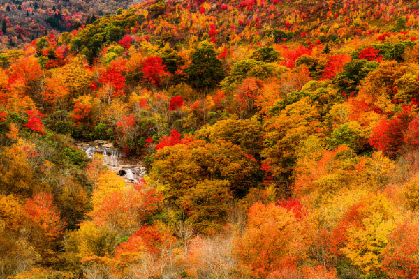 Graveyard Fields and Loop with waterfall in the distance surrounded by fall foliage