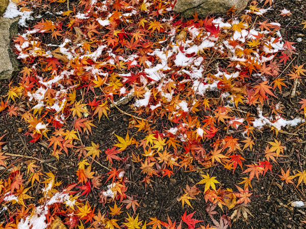 Asheville NC Fall Foliage Colors with red, yellow and orange leaves on ground with dusting of snow