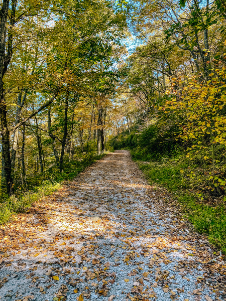 Bearwallow Mountain Access Road with leaves on gravel road surrounded by green trees