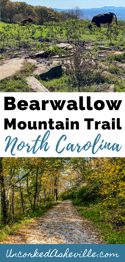 Bearwallow Mountain Trail Hiking Near Asheville NC Pinterest Pin with picture of pasture with cows and gravel access road with leaves