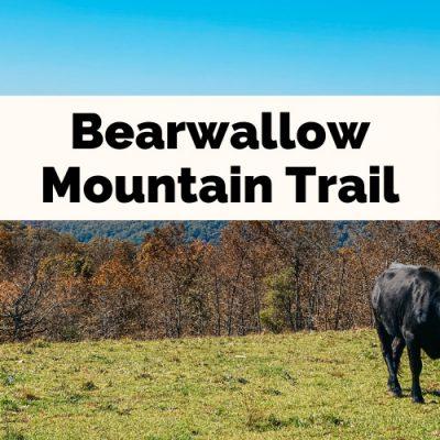 Bearwallow Mountain Trail: Extraordinary Picnic Views & Side-Eyeing Cows