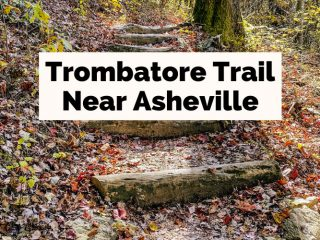 Trombatore Trail Near Asheville NC with forest stairs with logs and leaves