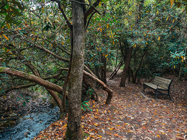 Asheville winter hiking trails North Carolina Arboretum with  bench by water under a tree