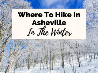 Winter Hikes Near Asheville with snowy trees at Bearwallow Mountain