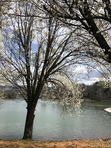 Beaver Lake Picnic Asheville NC
