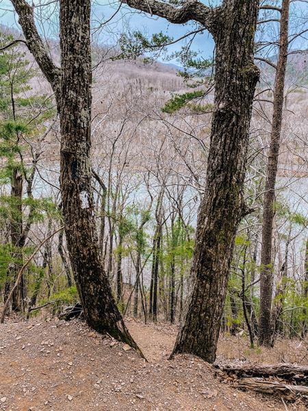 Lovers Leap Hike Appalachian Trail White Blazes with two trees and French Broad River