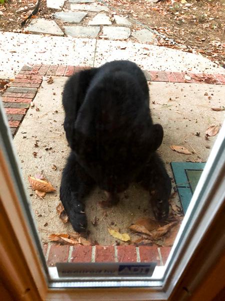 North Asheville black bear