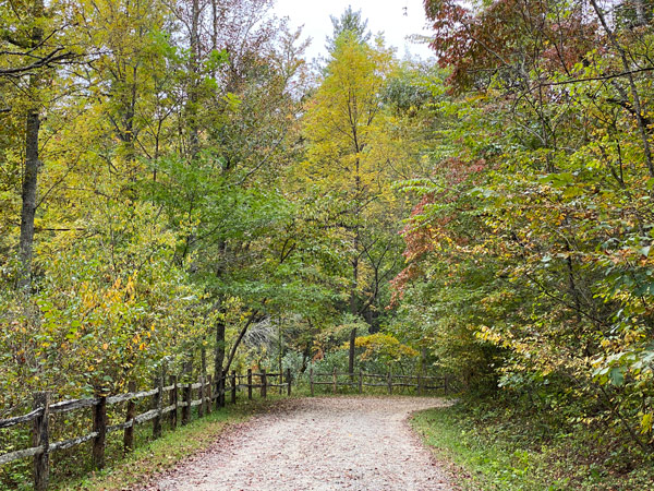 Bike Trails Asheville NC Arboretum with gravel road surround by green trees and fence