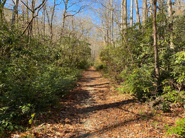 Daniel Ridge Loop Trail For Mountain Biking Near Asheville with trail surrounded by green trees