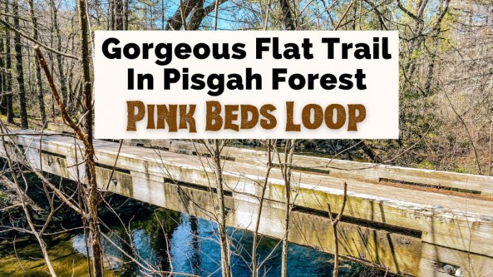 Pink Beds Trail Loop Pisgah National Forest with picture of bridge over water along the trail