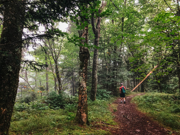 Dense Forest Little and Big Butt Trail NC with white brunette male with green backpack and red shirt walking down trail surrounded by trees