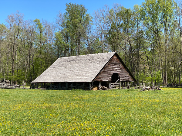 Mountain Farm Museum Great Smoky Mountains Cherokee, NC with green grass filled with yellow flowers and blue sky