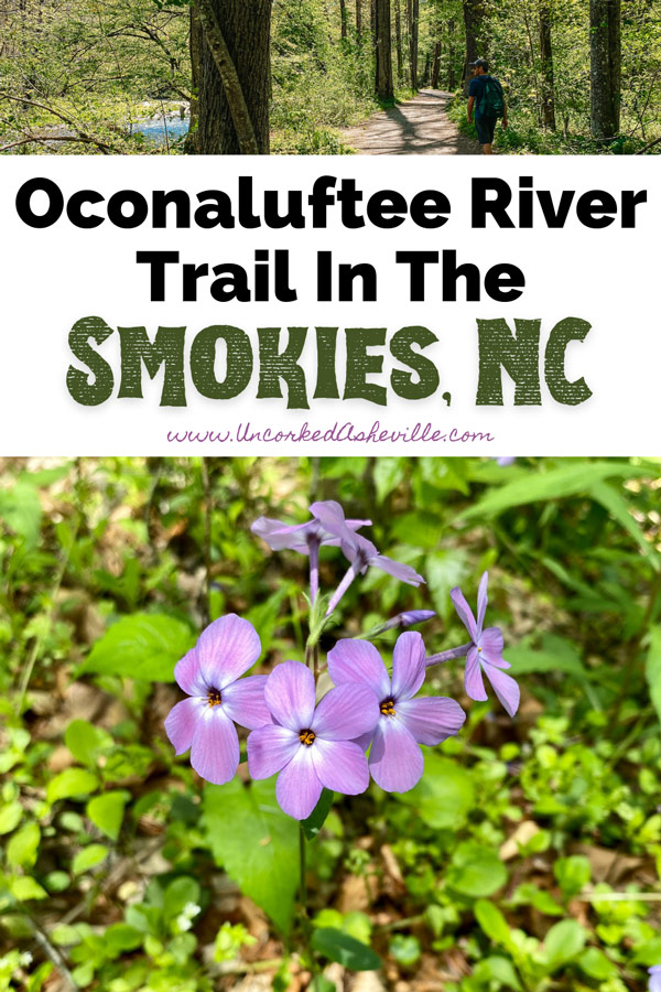 Oconaluftee River Trail Smoky Mountains NC Pinterest Pin with purple wildflowers and white male hiking on dirt trail by the river