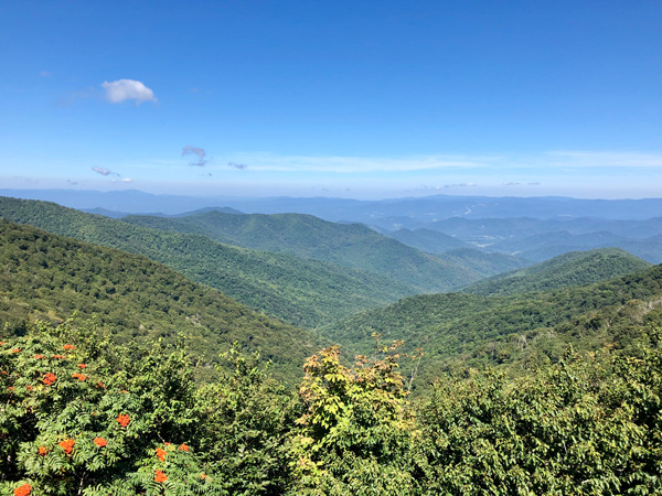 Craggy Gardens hike Blue Ridge Parkway NC with blue and green mountains and tiny red flowers